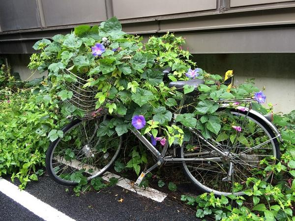 筑波大学 自転車2