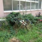 筑波大学の豊かな自然は放置自転車も飲み込む!?衝撃的な写真がネットで話題に!!