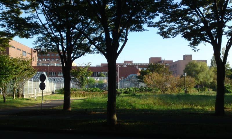 筑波大学 キャンパス 緑
