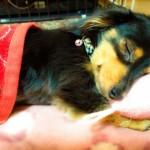 【ペットを飼いたい筑波大学生へ】安心してペットを飼える物件とは?お部屋探しのポイントを紹介!!