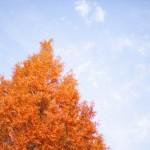『秋学期が始まる前に何をすればいいかわからない』という筑波大生がやっておくといいことトップ3を紹介!!