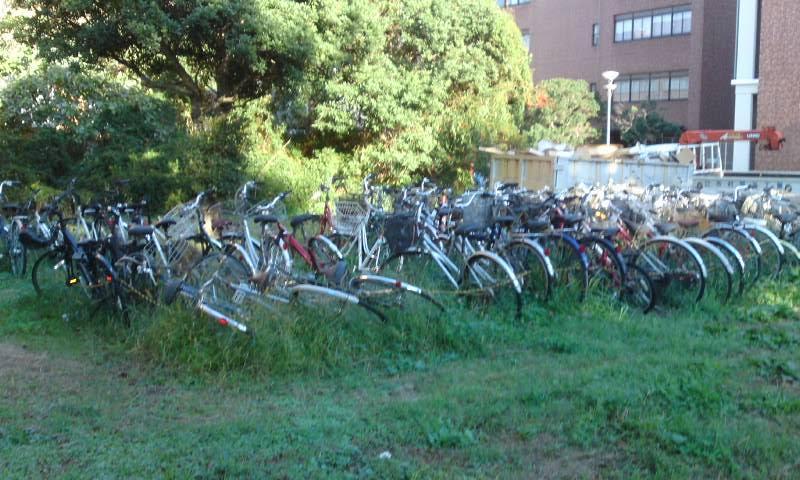 筑波大学 自転車1