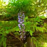紫色と松美池前