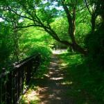 涼し気な松美池横の道